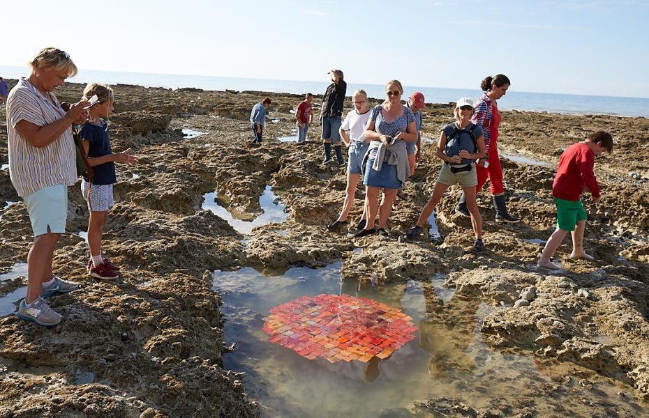 Laisses de mer impromptues au Bois de Cise 2